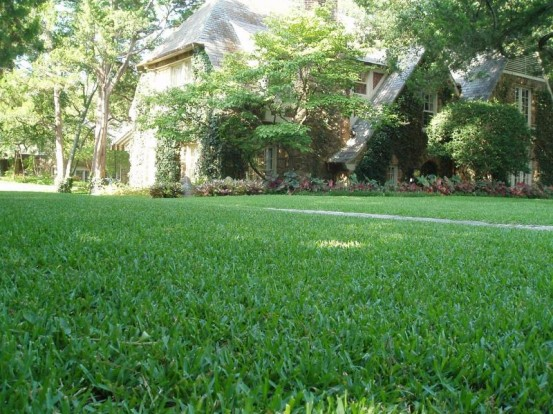 Replacing Your Lawn 3 Favorite Varieties For North Texas Soil Alive